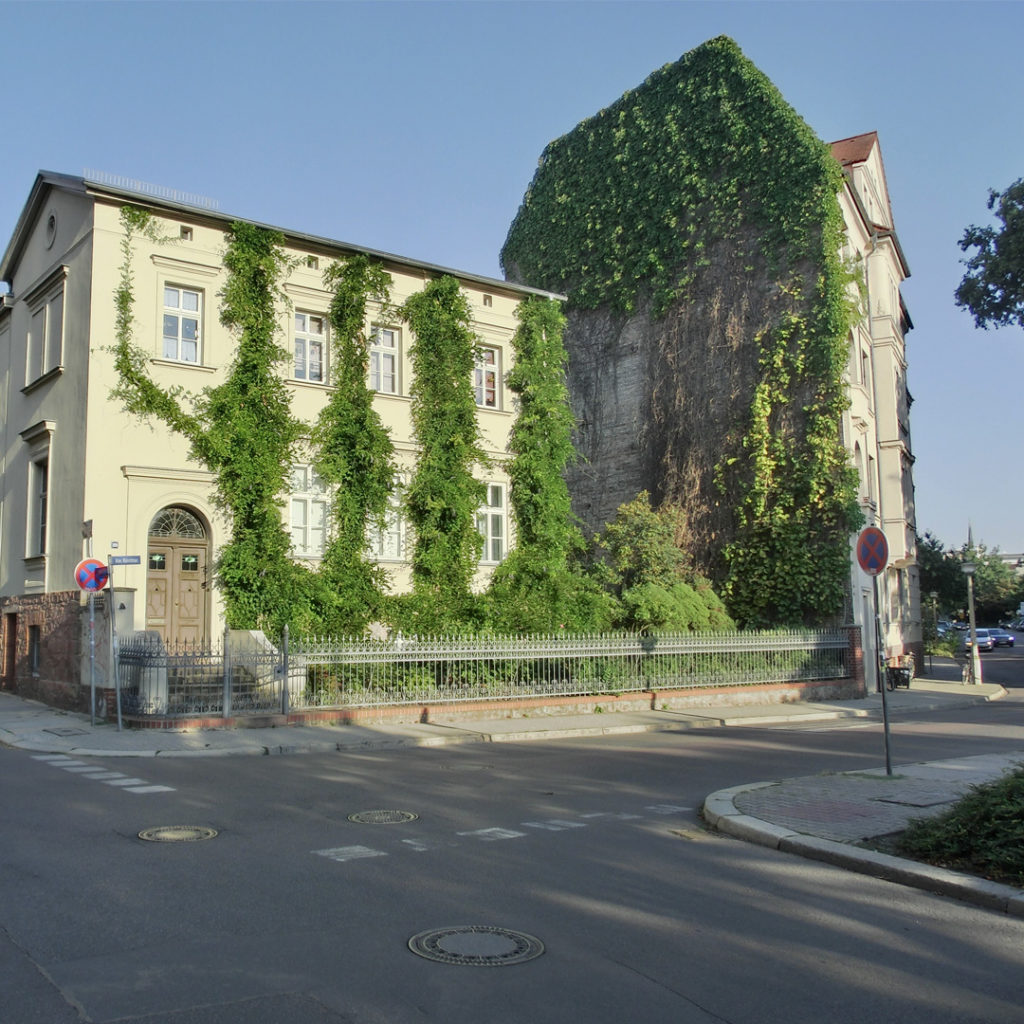 Mit Fassadenbegrünung gegen die Hitze