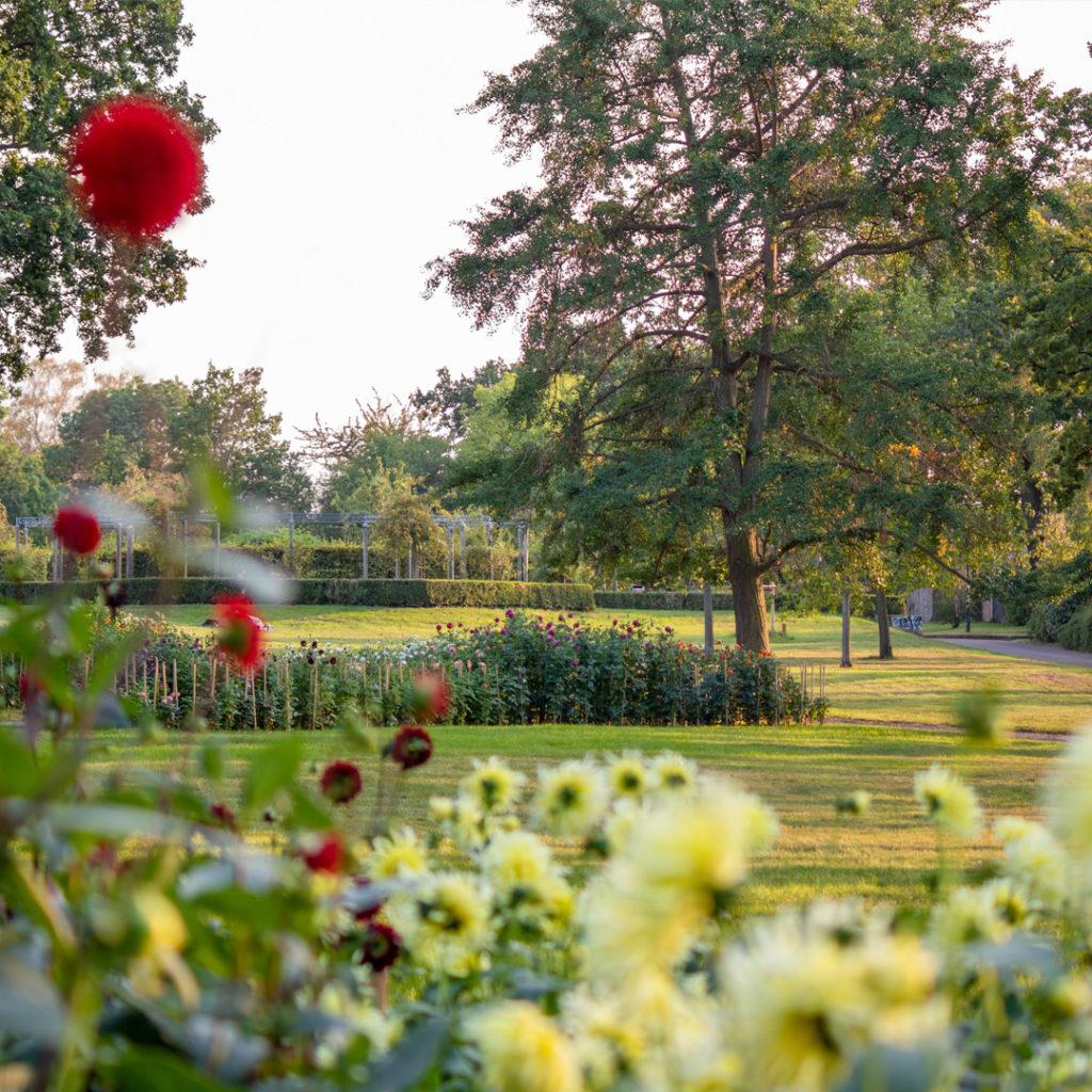 Im Herbst stellt der Dahliengarten im Pestalozzipark mit seiner Farben- und Blütenpracht alles andere in den Schatten.